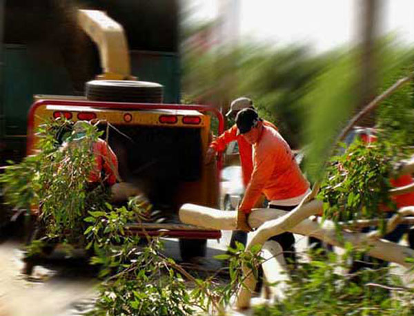 Phoenix Tree Removal specializes in storm cleanup.