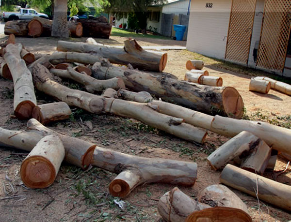 Phoenix Tree Removal will save you some firewood.